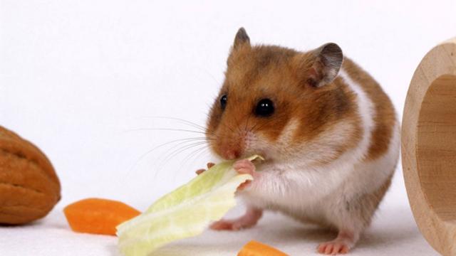 关于鼠疫你需要知道的事