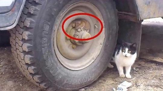老鼠躲在轮胎上想?#25918;?#29483;咪