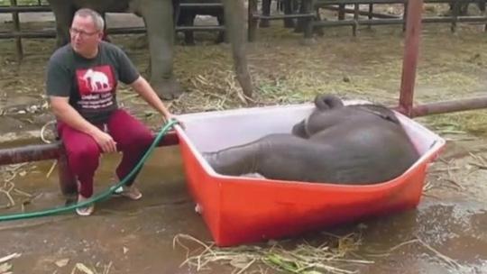 饲养员给小象洗澡