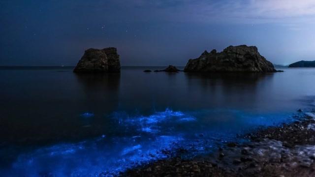 马来西亚的荧光海滩