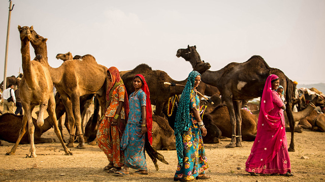 感受印度塔尔沙漠骆驼之旅