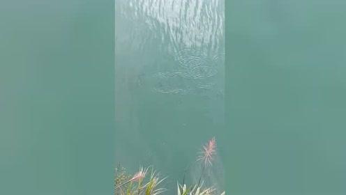这地方鱼还真不少,抛几颗玉米粒鱼儿就吃了,最后却钓这种鱼上岸