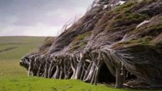 神秘又奇幻的斜树林,对抗强风树干树枝严重倾斜,却被称为世界最美的树!