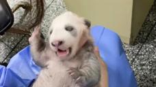 当熊孩子刚满月不久,,甘愿做你们怀里的小可爱!_搞笑_好影视网