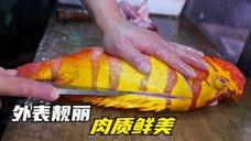 价值5000日元的海王石斑鱼,土豪连夜驱车过来品尝,好吃到停不下嘴 美食视频 第1张