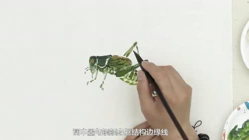 国画入门基础虫草-蝈蝈 (95播放)