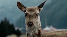 美国惊现大量丧尸鹿,生化危机或将爆发?僵尸病毒是否存在?