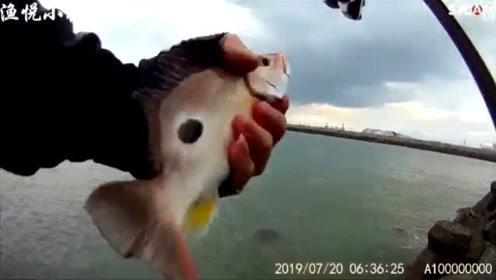 矶钓,夏天钓鱼是真爱,新带的徒弟上了好多鱼,运气不错