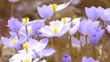 黑龙江森林公园开放  花草盛开