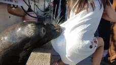 小女孩在岸边¡°挑逗¡±海狮£¬不料惊险的事情发生£¬镜头记录全过程