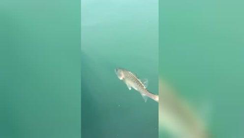 这天唯一找乐子的就是钓鱼了,其中溜鲈鱼是无比喜悦啊