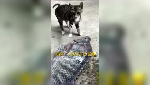 权威解释'猫非'的真正含义