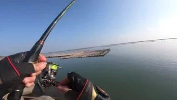 矶钓,黑鲷鱼一条条拉上岸,太喜欢这里了