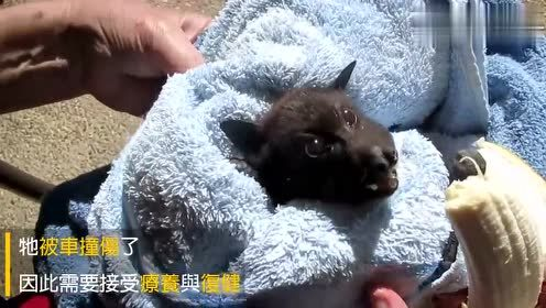 If you don't look carefully, you think it's a puppy. I didn't expect it to be a flying fox.