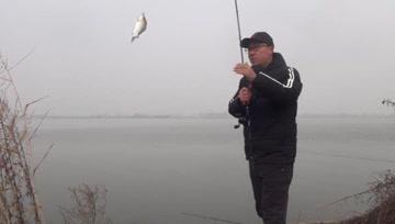 钓鲫鱼这招真狠,冬天也能连竿双飞,鱼钓太多大板鲫都直接放生