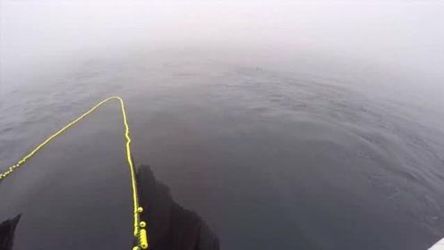 这才是高科技捕鱼,那么大的一张渔网,根本都不需要人工的操作