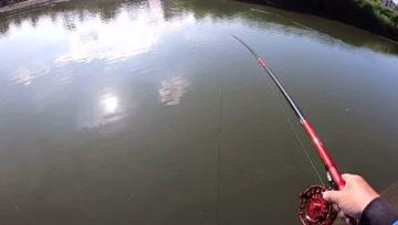 前打钓鱼,瓜瓜黑格红槽鱼,狂咬的节奏,虾不够用