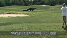 美国出现巨型鳄鱼,体长16英尺,在高尔夫球场散步惊到众人