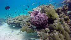 Forra Diving PADI OW课程学习