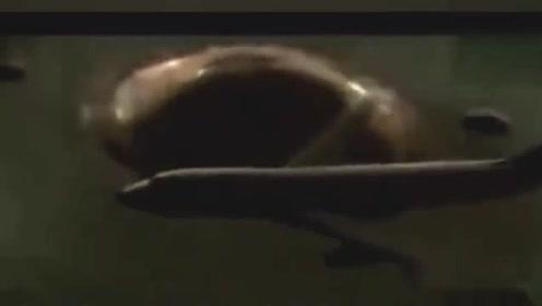 1986年日本飞机遭遇到不明飞行物UFO的图片