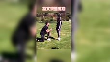 拉文求婚,旁边那只狗太搞笑了哈哈哈哈哈