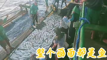 总共不知多少鱼,整个画面都是大鱼!