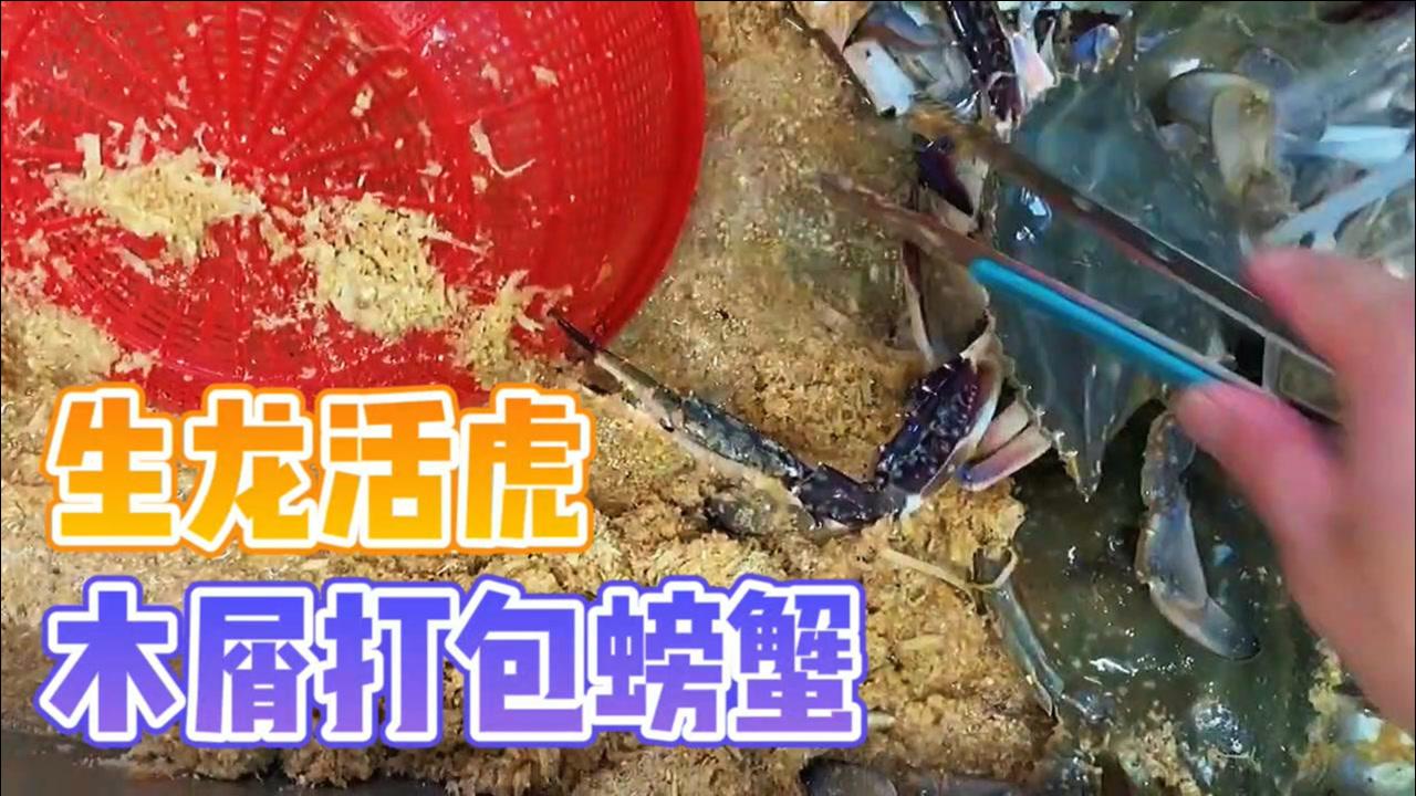 木屑打包的螃蟹,每一只都生龙活虎!