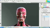 CG绘画教程第4讲:头部结构系统与骨骼动态变化 (75播放)