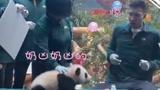 易建联有多可爱?被大熊猫吓的一哆嗦,杜峰:你硬一点行不行!