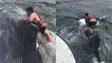 巨大座头鲸被鱼线所困 小伙勇敢爬上其背部营救