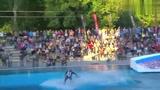 泳池冲浪,冲起来!确实要点技术!